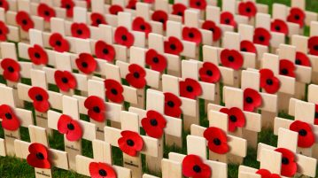 Field of poppies and crosses to remember our veteran ancestors on Remembrance Day