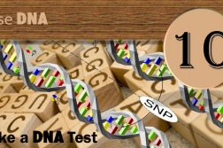 Step Ten: DNA Research