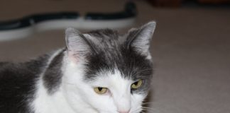 Cody the Crazy Cat