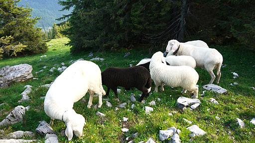 Black Sheep Sunday | Harris Family-1260