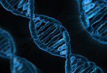 Ancestry DNA