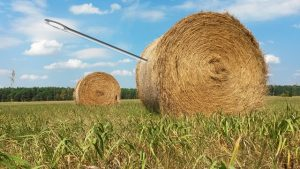 needle-in-a-haystack-1706106_640