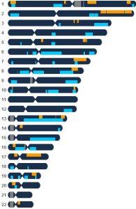 chromosomes-cousins